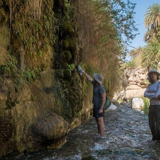 ממלאים מים מהנביעות המטפטפות לאורך המסלול