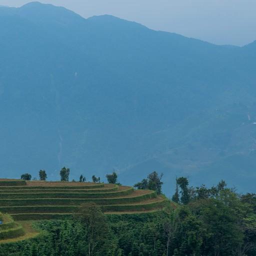 שדות האורז בדרך לכפר