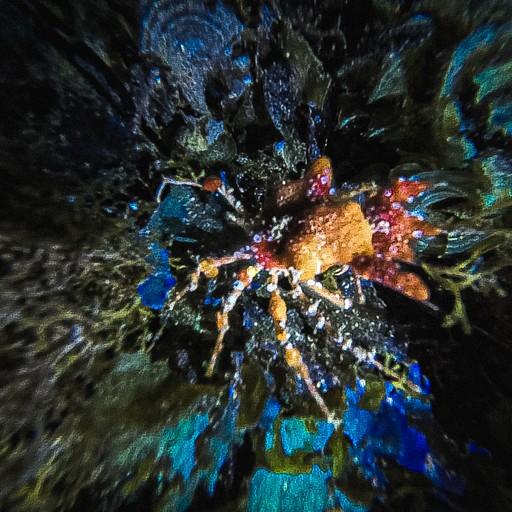 המצלמה מתקשה להתפקס בחושך על עכביש הים