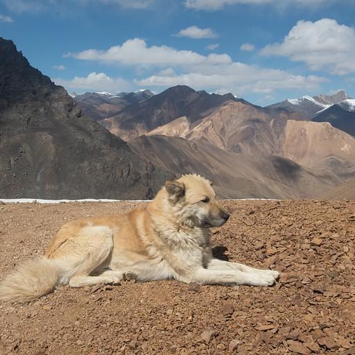 סבאקה, הכלב האמיץ שליווה אותנו לאורך הטיול