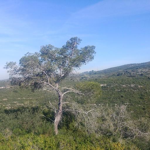 הנוף הנשקף מצפון להר שוקף