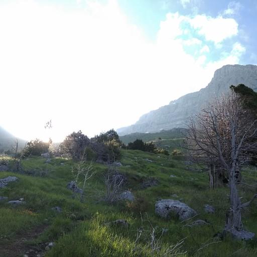 חצי עץ בדרך למיקרו פאפיגו (לחצו על התמונה כדי לחזות בחצי השני של העץ)