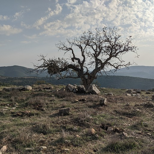 """עץ בודד בחורבת ב""""ק"""