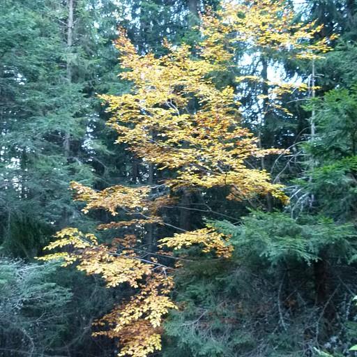 שלכת בלב היער