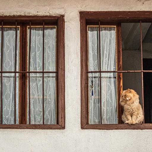חתול בוחן את הרחוב מאדן ההחלון