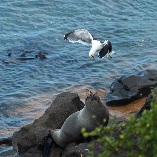 אלבטרוס רב עם כלב ים
