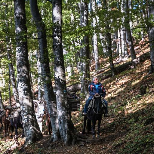 בחזרה דרך היער, בעל הבקתה עקף אותנו על סוס