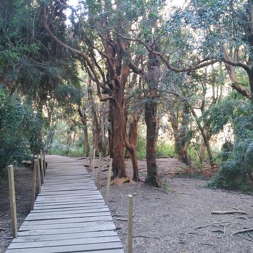שמורת עצי Arrayanes  (12#) קרדיט לתמונה-  serra08 (מאתר wikiloc) https://www.wikiloc.com/hiking-trails/parque-llao-llao-21364702#wp-21364708