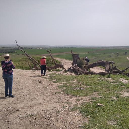 תל נגילה והעץ שנהרס בסופה בשנת 2020