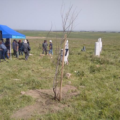 העץ החדש שנשתל השנה בתל נגילה ברקע טקס לכבוד נטיעת העץ