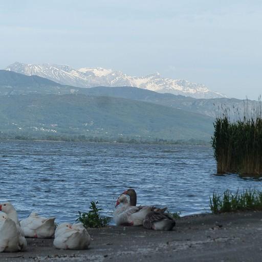 על האי של יואנינה - מצלמים ברווזים וברקע הרים מושלגים שעוד מעט נעלה לפסגתם