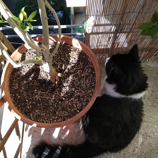 פוטיני הזהירה אותי שאדון חתול אוהב את המרפסת שבחדר האורחים. בבוקר הוא חיכה בסבלנות שאתעורר וברגע שפתחתי את הדלת הוא רץ לדלת המרפסת וביקש בנימוס שאפתח לו.