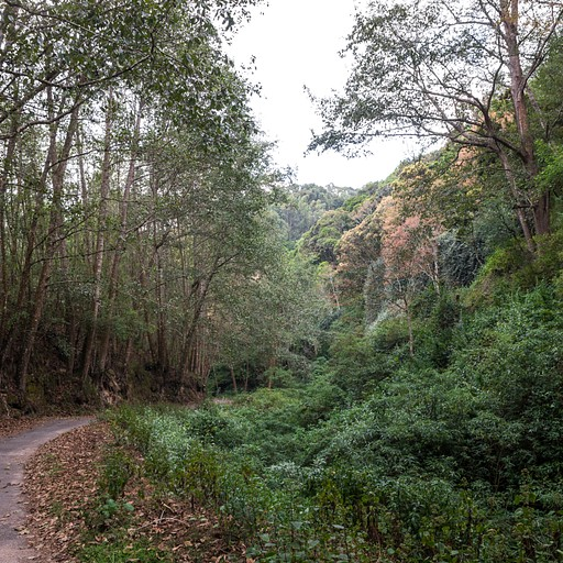 היער בדרך למגרשי הפולו