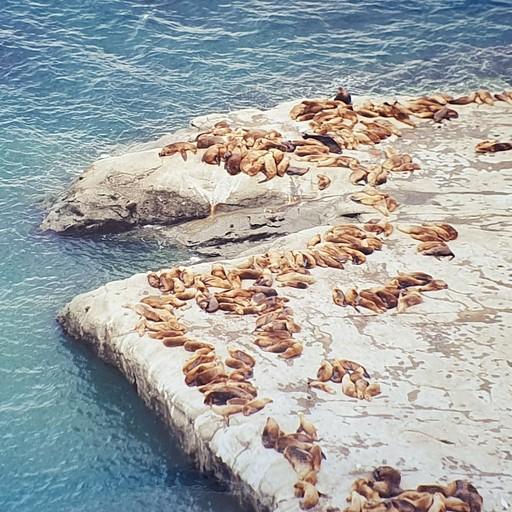 כלבי יום בדרום היבשת באוקיינוס האטלנטי