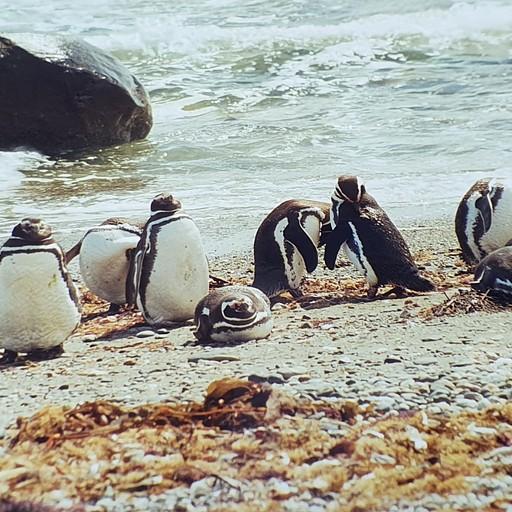 מושבת פינגוויני מגלן