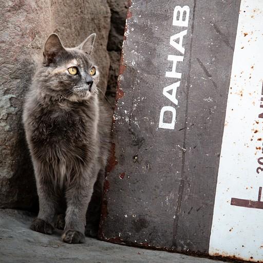 חתול רחוב סקרן מחוץ למלון
