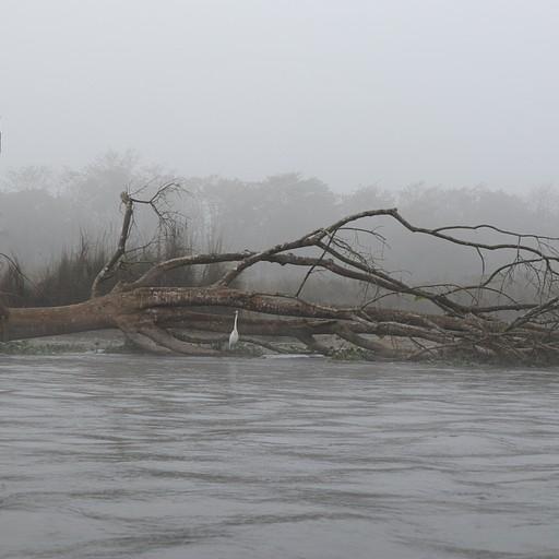 ערפל בשייט על הנהר בבוקר