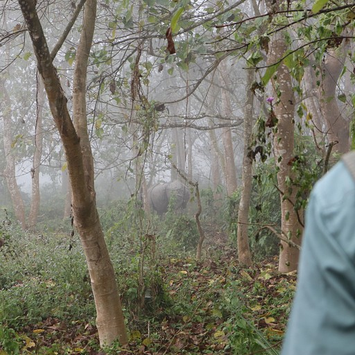 קרנף בין העצים בערפל בבוקר