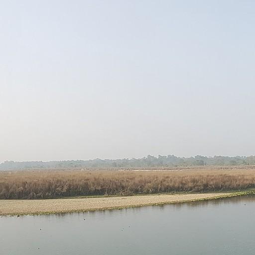 תמונת פנורמה בין העצים על הנהר
