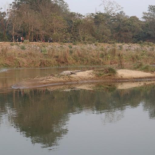 תנינים באי באמצע הנהר