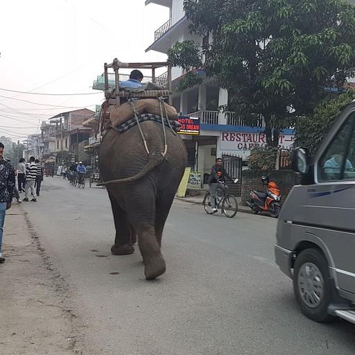 פיל מתהלך באמצע הרחוב, גם קרנף הגיע בלילה לאכול מהשדות של התושבים
