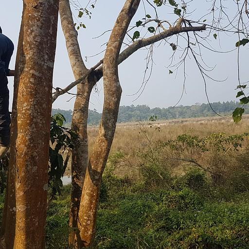 תצפית מגבוה על הקרנפית, ג'ונגל משוגע