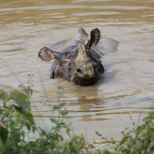 הקרנפית בזום אין, משחקת במים