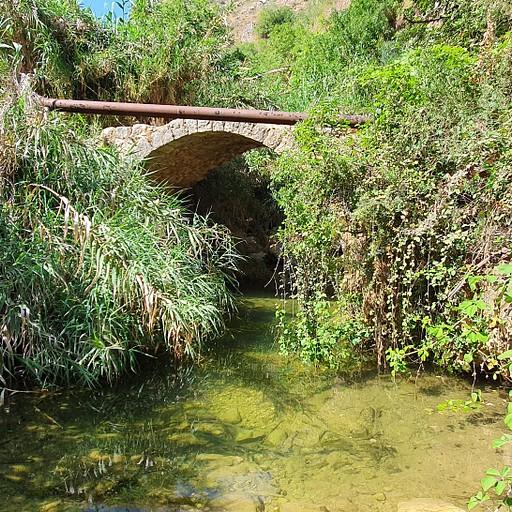 בריכה בנחל עמוד למרגלות גשר