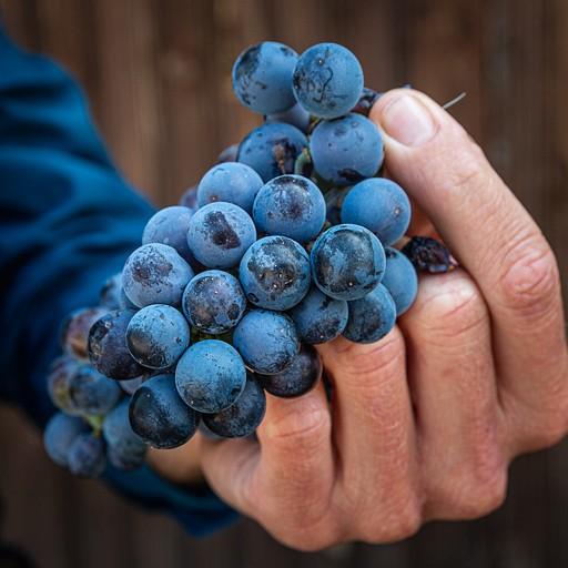 טעם של ארטיק ענבים