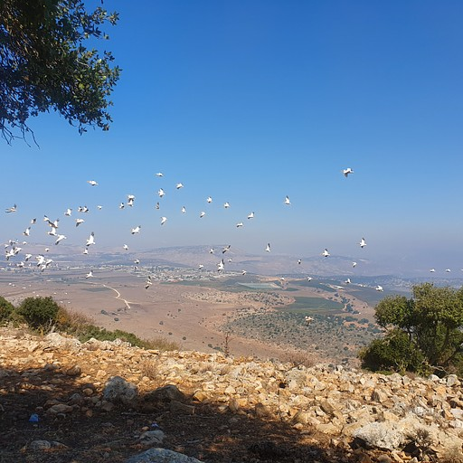 תצפית הר אביתר