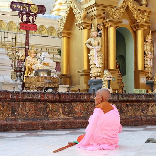 נזירה מתפללת בShwedagon Pagoda