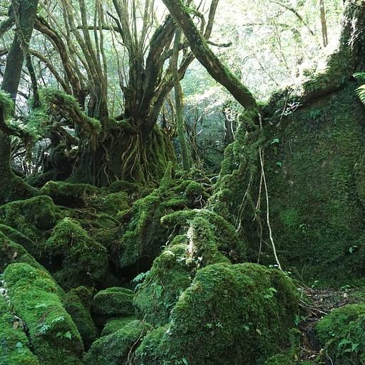 יער הטחב בשיראטאני