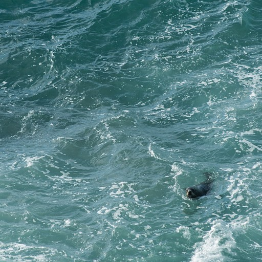 הים היה קצת סוער