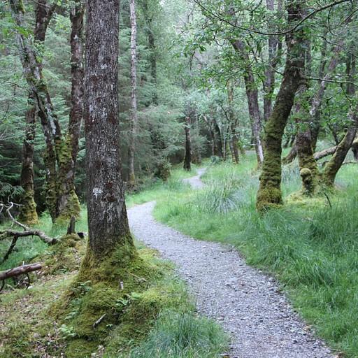 מתפתלים במעבה היער