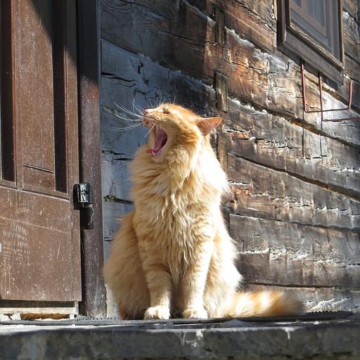 החתול ששומר על הקאבאנה
