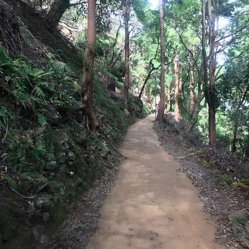 פארק הקופים באראשיימה