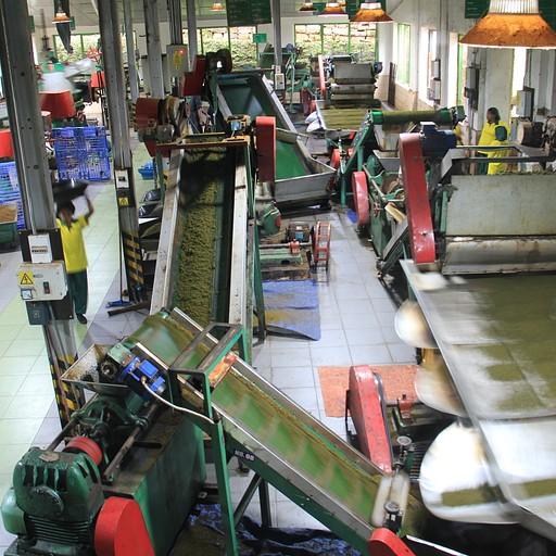 Damro Tea Plantation המפעל