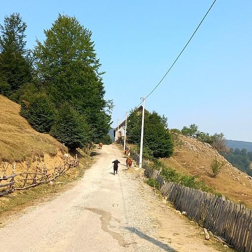 העליה להר גרבן עם רועת הפרות המקומית