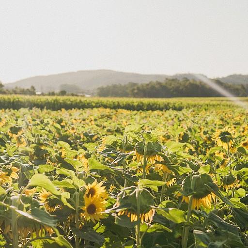 המסלול עובר בעיקר בין שדות חקלאיים