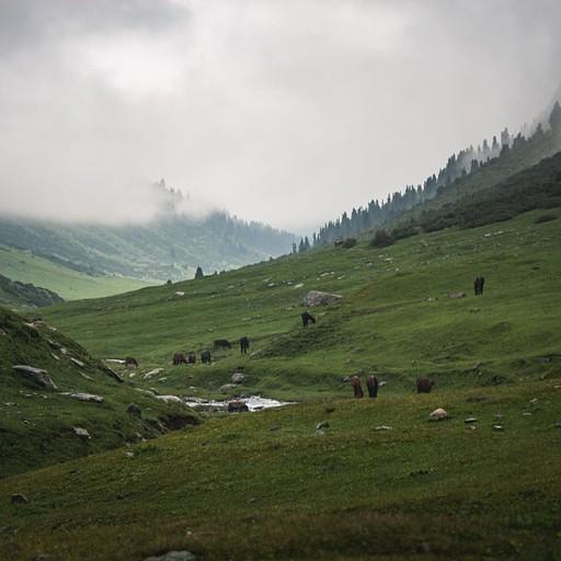 שטחים פתוחים מלאםי בסוסים ופרות