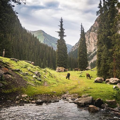 הדרך יוצאת מהיער ומתחברת לשביל עפר רחב