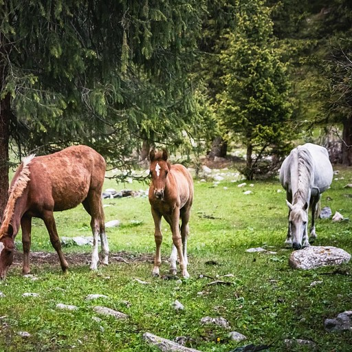 עשרות סוסים מסתובבים סביבנו במרחק נגיעה