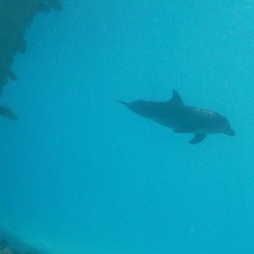דולפין אף בקבוק