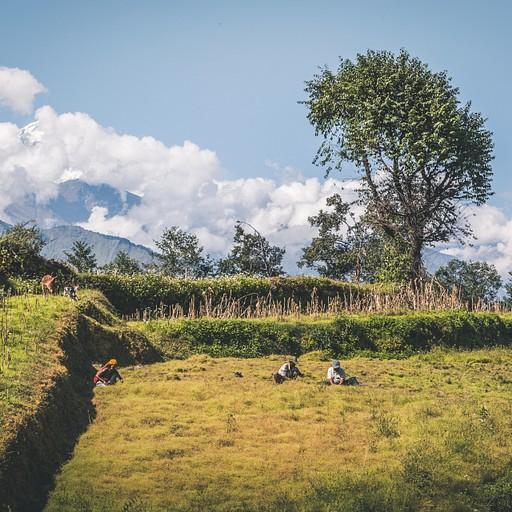 איכרים עובדים בשדה