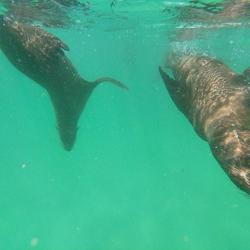 שחייה עם כלבי ים בפלטנברג