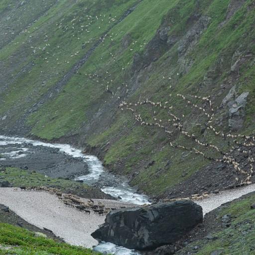 עדר כבשים חוצה את הנחל על גבי קרחון מעט לפני ההגעה לפוסטיראנג