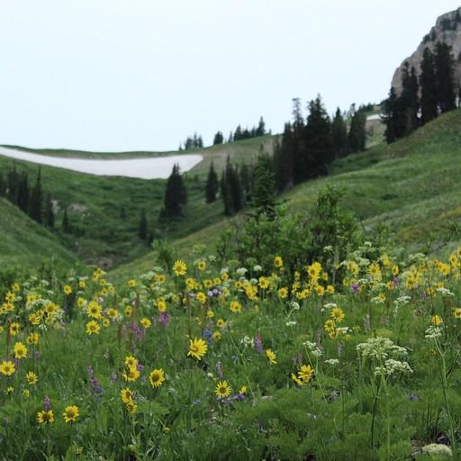 פריחה בעמק על רקע Fox Creek pass