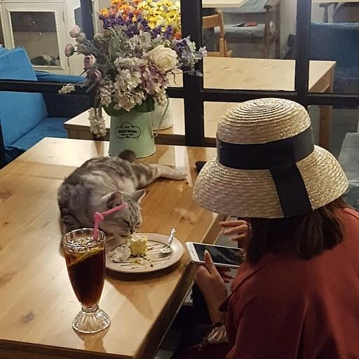 בבית קפה שיש בו חתולים!
