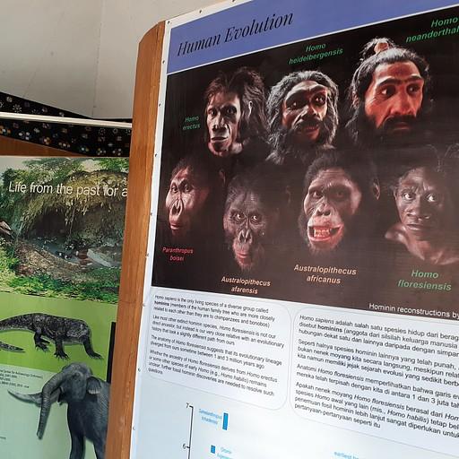המוזיאון שנמצא ליד המערה עם הסברים על ההומו פלורסיס.