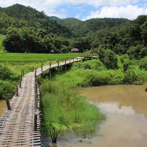 Holy bamboo bridge